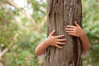 Arboriste