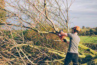 Du bois et des hommes, les métiers au creux des arbres
