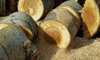 Les métiers du bois : surannés ou à la mode ?