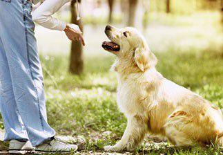 Les métiers de l'éducation canine