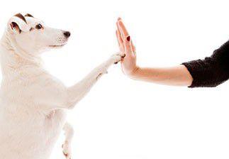 Quand l'Homme et l'animal mettent ensemble la main à la pâte