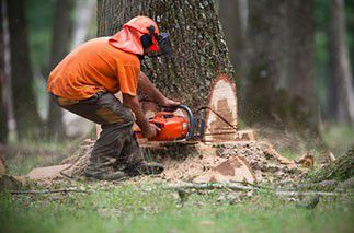 Bûcheron/ouvrier forestier