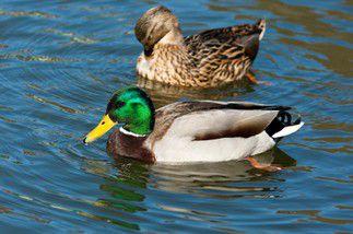 Garde national de la chasse et de la faune sauvage