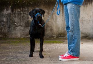 Educateur de chien guide d'aveugle